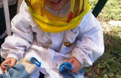 דבורים כחול-לבן: יום העצמאות לכל המשפחה במכוורות ישראל